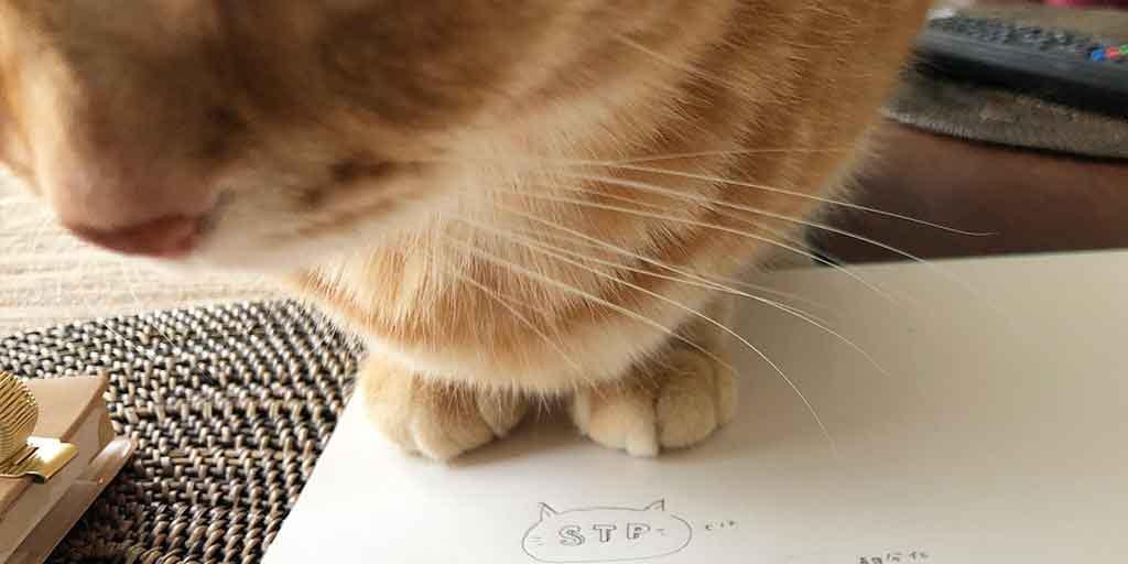 ノートに乗る猫